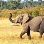 Kako izgleda slon? - priča za vjeronauk