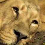 Priča o jaguaru ili priča o suosjećanju i prevari