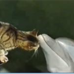 Prijateljstvo mačke i dupina - video zapis