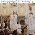 Svećenik u Brazilu spašava ulične pse - na Misi predstavi i traži dom za njih